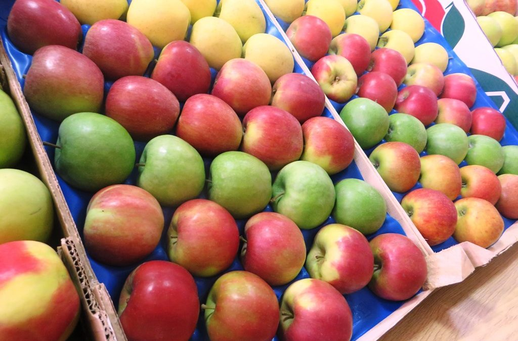 Obilježen Svjetski dan jabuke u Sv. Martinu na Muri