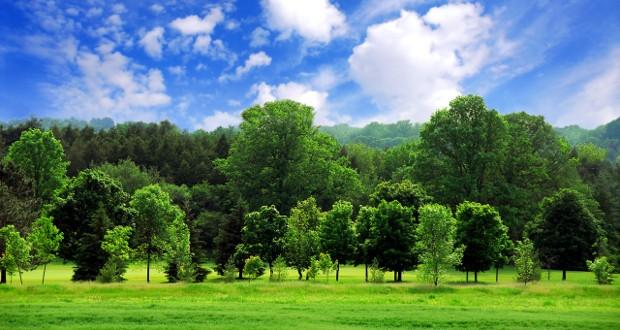 Poziv na obilježavanje Svjetskog dana šuma