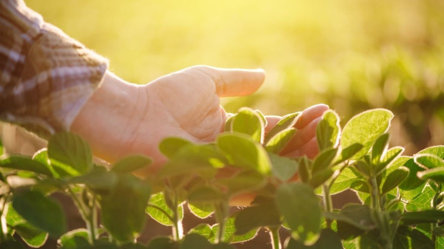 """Izmjene Natječaja za tip operacije 4.1.1. """"Restrukturiranje, modernizacija i povećanje konkurentnosti poljoprivrednih gospodarstava"""" sektor biljne proizvodnje"""
