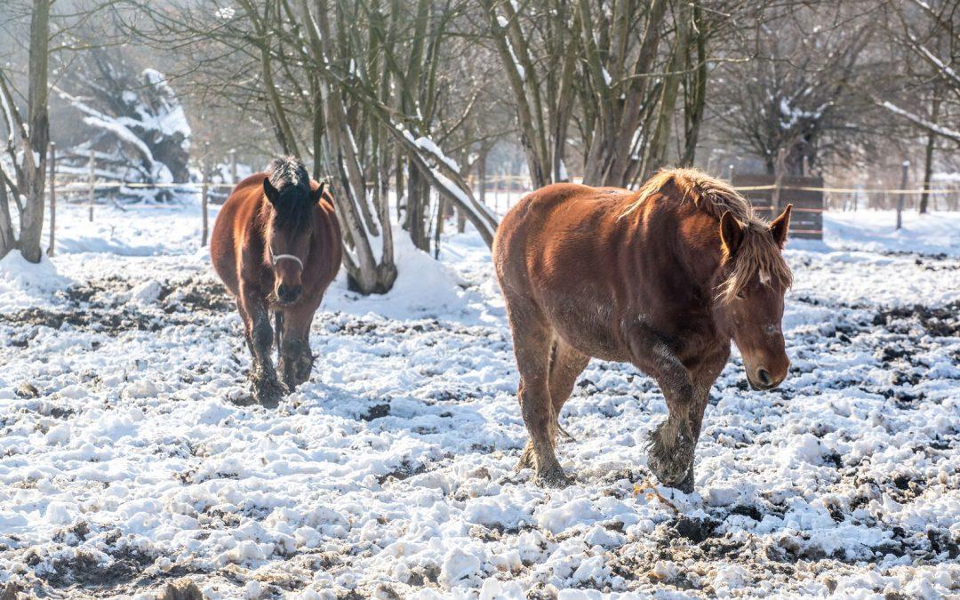 Podnošenje zahtjeva za mjere iz Nacionalnog programa poticanja provedbe uzgojnih programa za toplokrvne pasmine i uzgojne tipove konja
