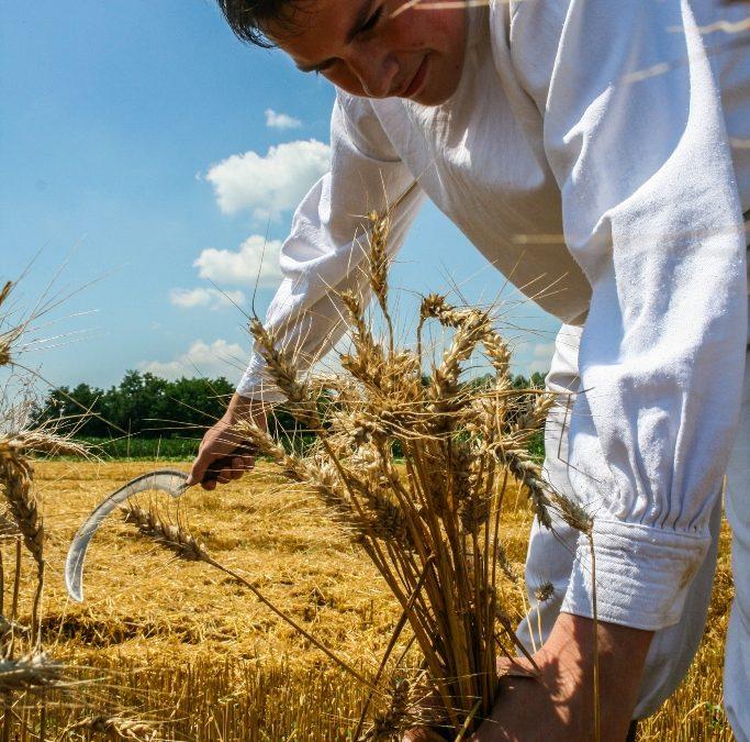 """Natječaj za provedbu Podmjere 5.2. """"Potpora za ulaganja u obnovu poljoprivrednog zemljišta i proizvodnog potencijala narušenog elementarnim nepogodama, nepovoljnim klimatskim prilikama i katastrofalnim događajima"""""""
