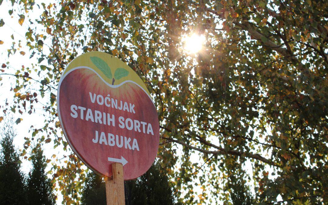 Obilježen Svjetski dan jabuke u Voćnjaku starih sorti jabuka u Brezovcu