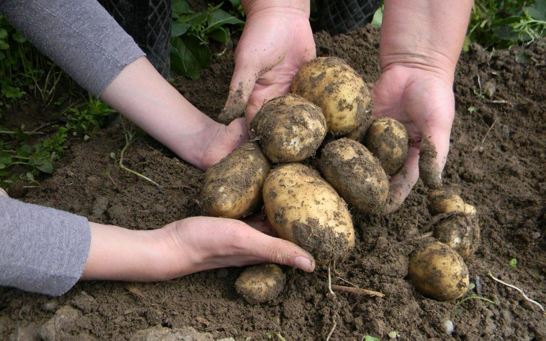 Natječaj za tip operacije 4.1.1 Restrukturiranje, modernizacija i povećanje konkurentnosti poljoprivrednih gospodarstava – ulaganja u skladišne kapacitete za krumpir
