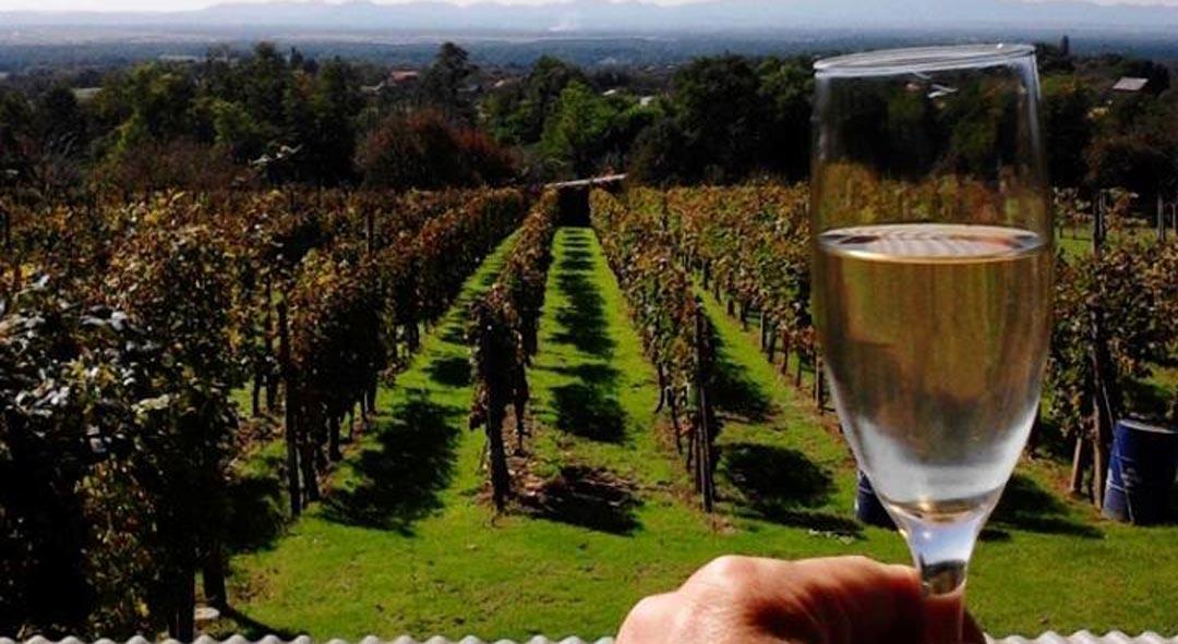 Osigurana dodatna sredstva za mjere pomoći vinarima