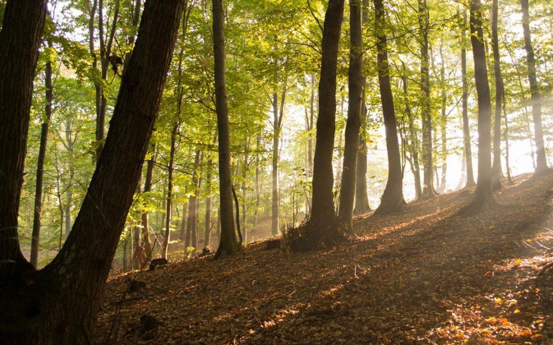 Natječaj za tip operacije 4.3.3 Ulaganje u šumsku infrastrukturu