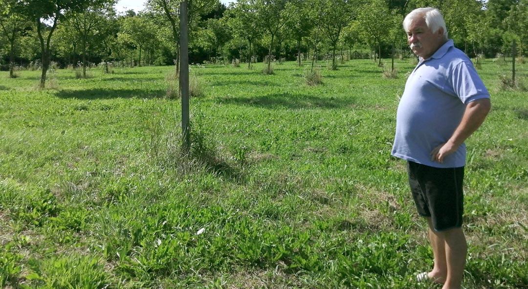 U ekološkom uzgoju 600 stabala oraha