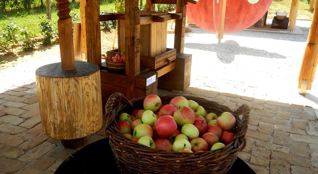 Obilježavanje Svjetskog dana jabuka u Brezovcu – 20. listopada