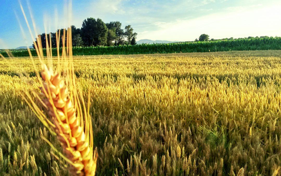 Natječaj za tip operacije 3.1.1 Potpora za sudjelovanje poljoprivrednika u sustavima kvalitete za poljoprivredne i prehrambene proizvode