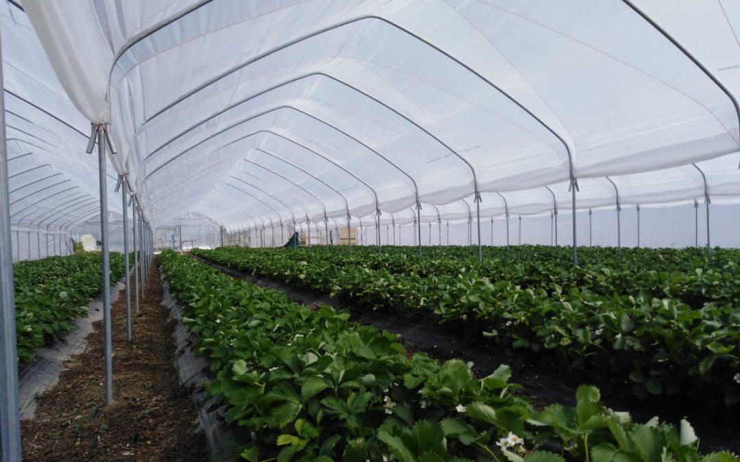 Natječaj za TO 4.1.1 Restrukturiranje, modernizacija i povećanje konkurentnosti PG – ulaganja u proizvodnju povrća u zaštićenom prostoru – plasteniku