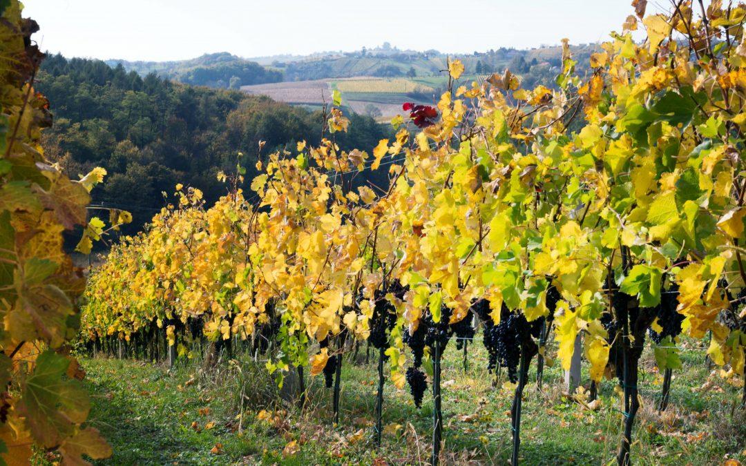 Natječaj za Ulaganje u vinarije i marketing vina