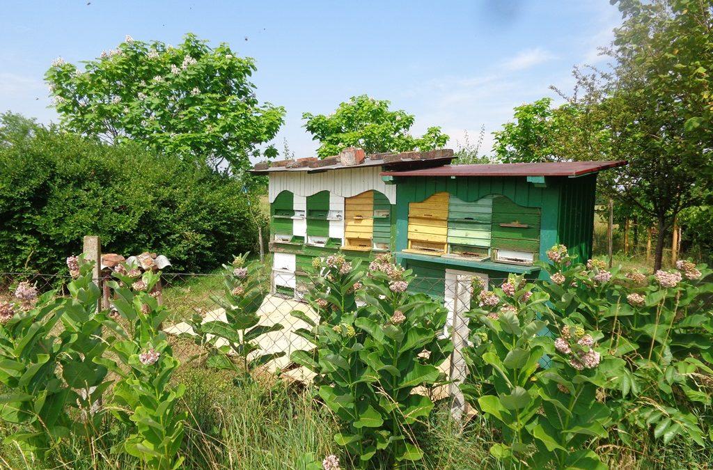 Rok za predaju zahtjeva za Mjeru 1, Mjeru 2 i Mjeru 3 za pčelarsku godinu 2021. ističe 20. travnja 2021.