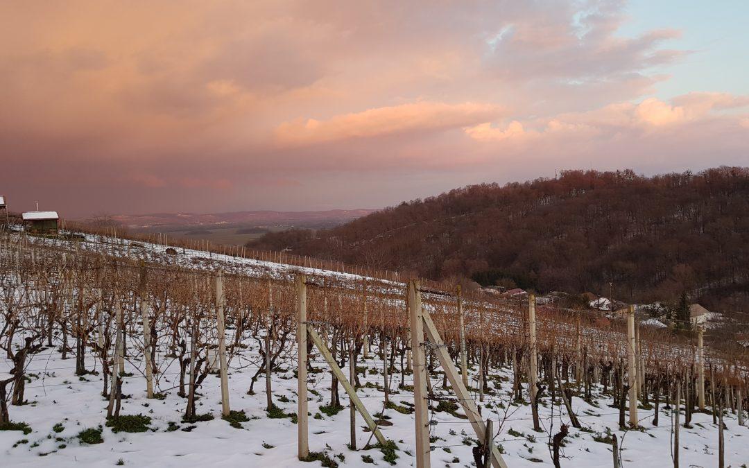 Otvoren Javni poziv za sufinanciranje rada regionalnih organizacija vinara i vinogradara od 2021. do 2023. godine – zaprimanje prijava do 15. srpnja 2021. godine