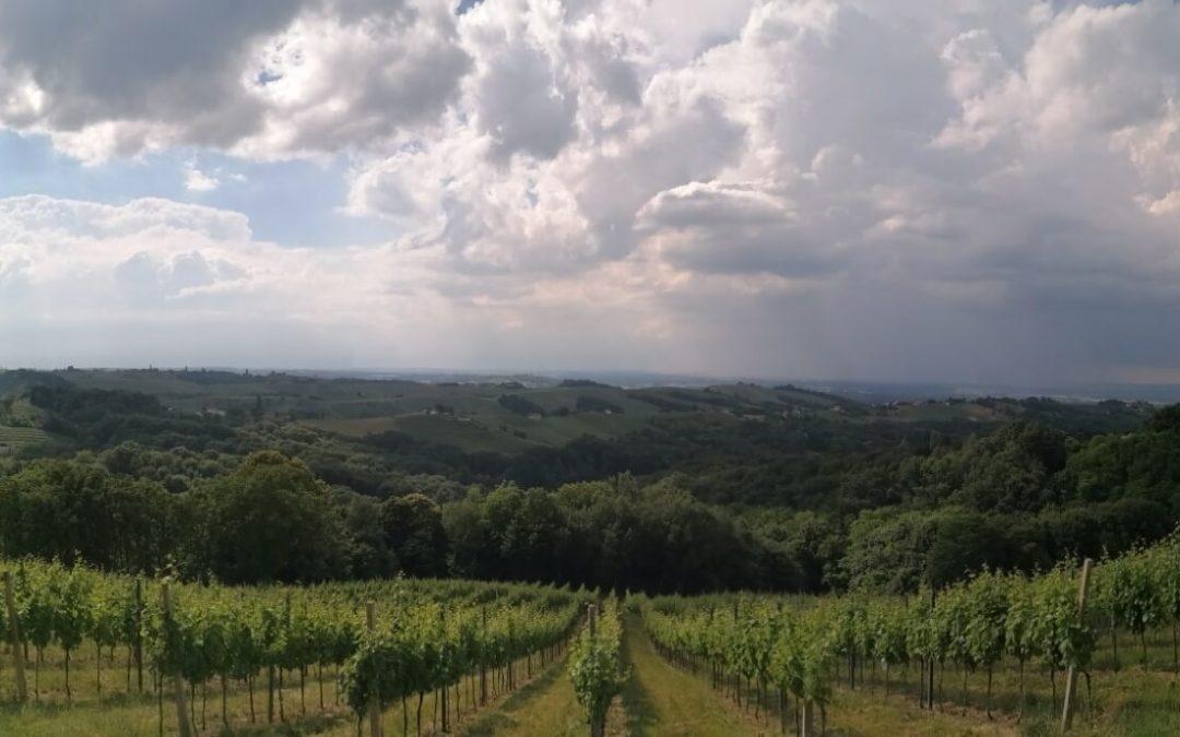 Mjera Restrukturiranje i konverzija vinograda – objava rang liste