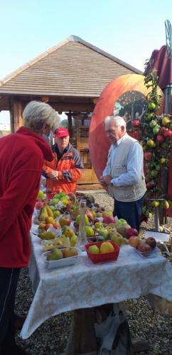Svjetski dan jabuka u voćnjaku starih sorti jabuka u Brezovcu - 03