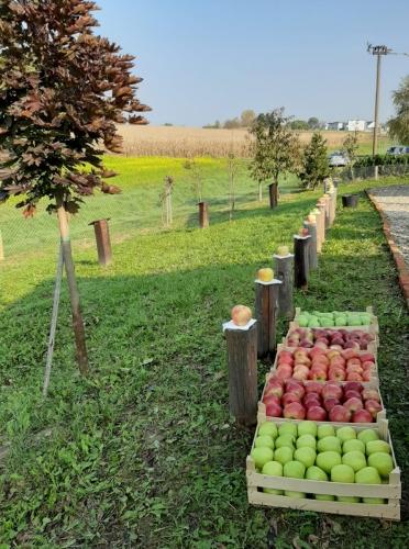 Svjetski dan jabuka u voćnjaku starih sorti jabuka u Brezovcu - 15